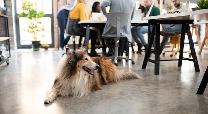 Hunde im Büro erlauben? – Das sollten Sie bedenken