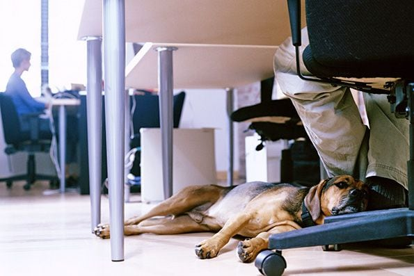 Following the Letter of the Disability Law - dog at work