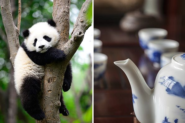 4-businesses-weird-successful-sarah-kaufmann-periu-open-forum-panda-poop-tea-embed